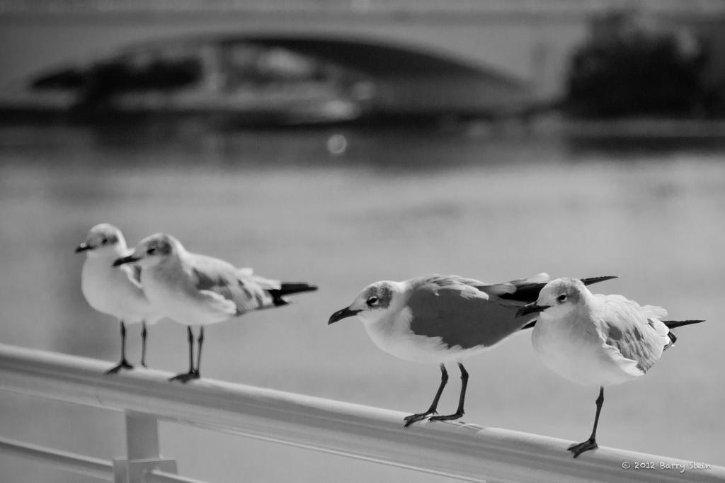 4birds-8672