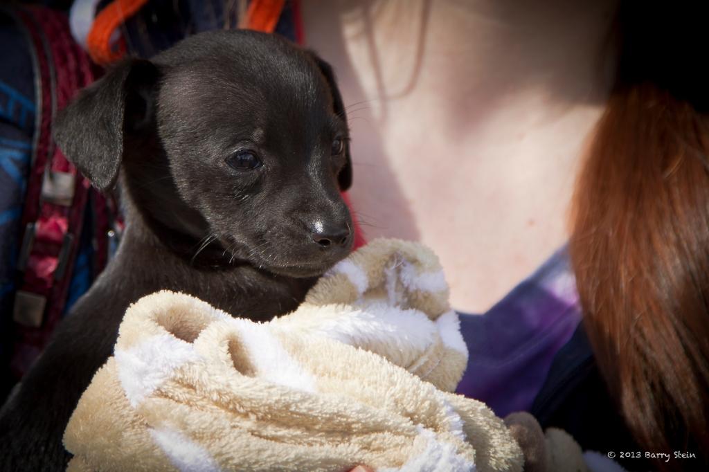 littleBlackdog-9720