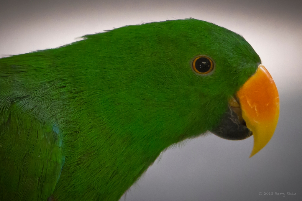 GreenParrotProfile-2229
