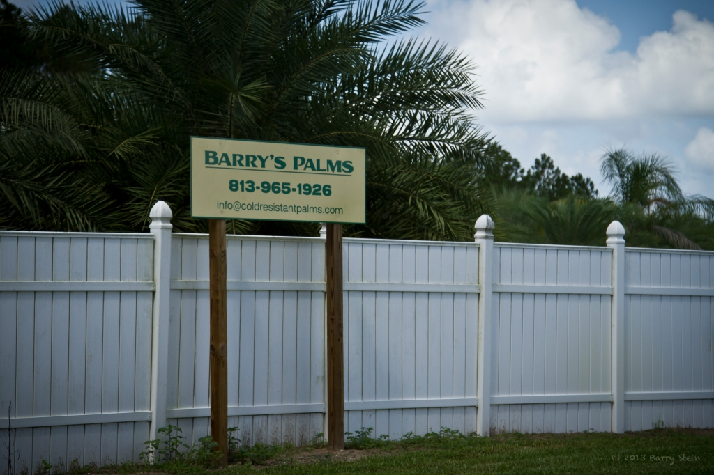 BarryPalms-2874