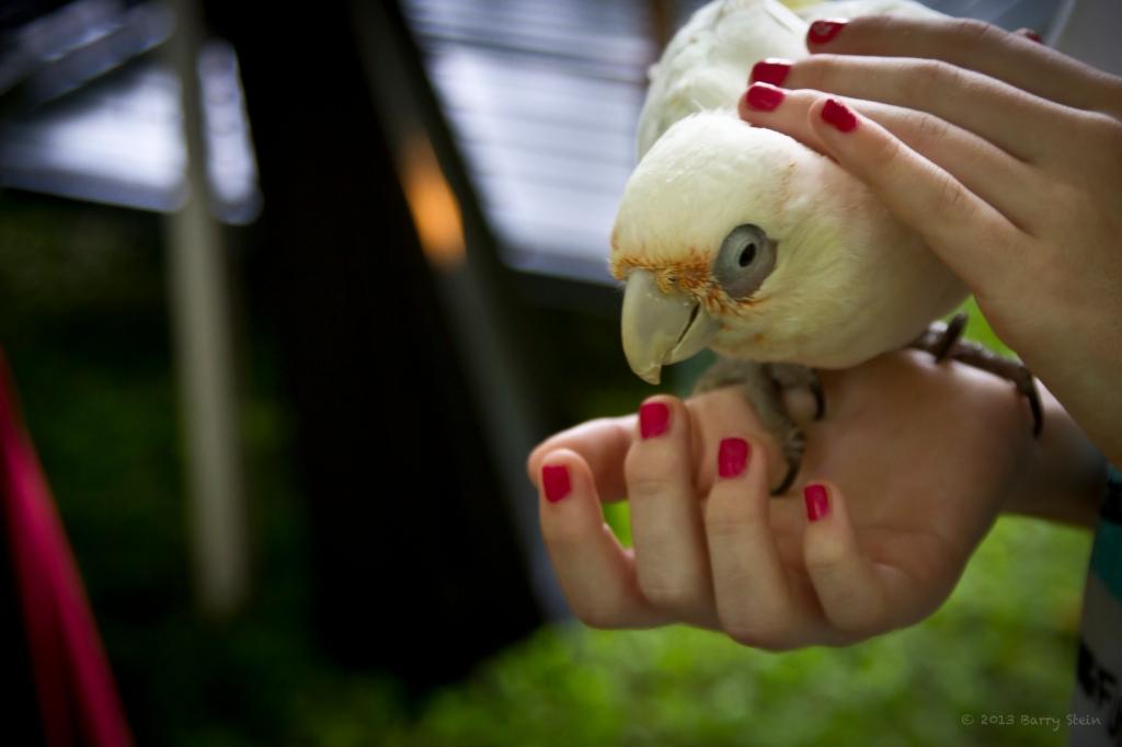 BirdInTheHand-3334