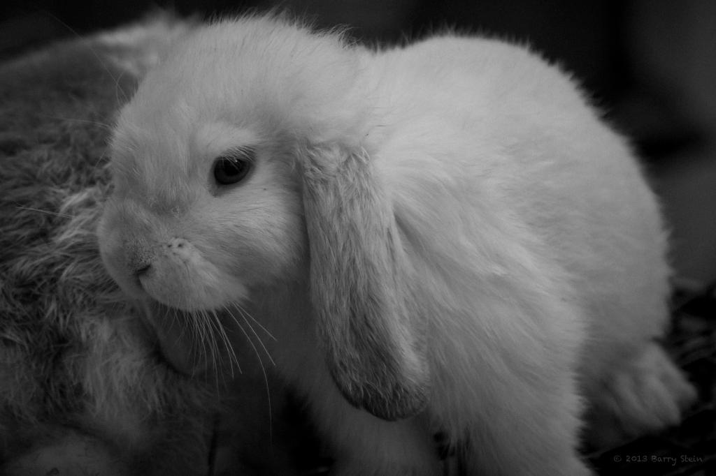 bunny-3222