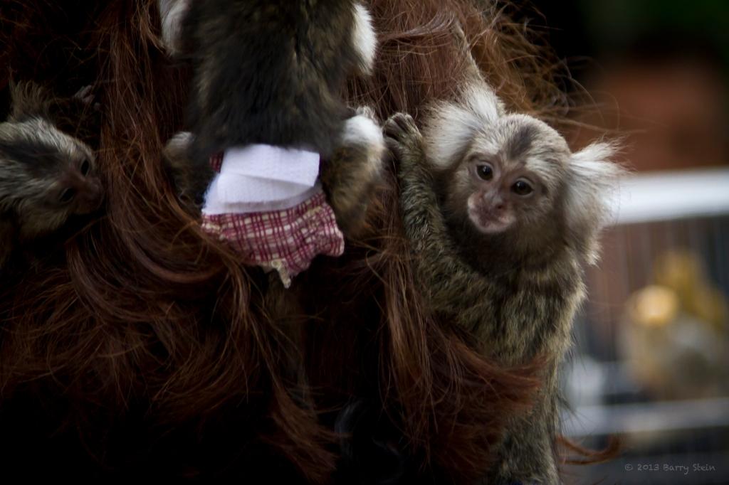 MonkeyHead4-3435