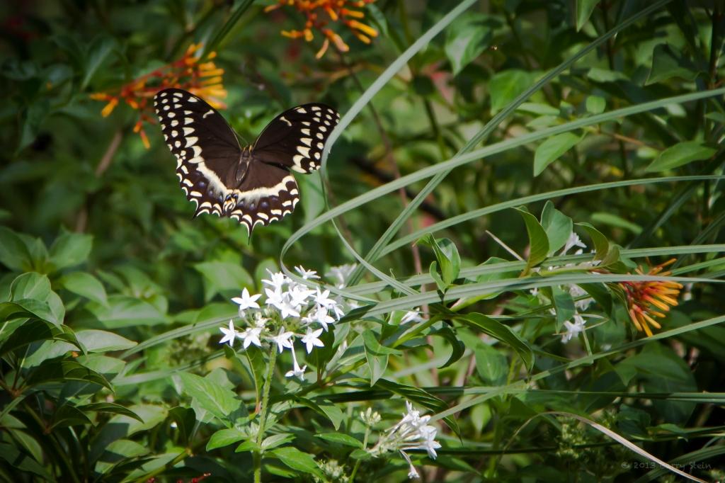 Butterfly-6121