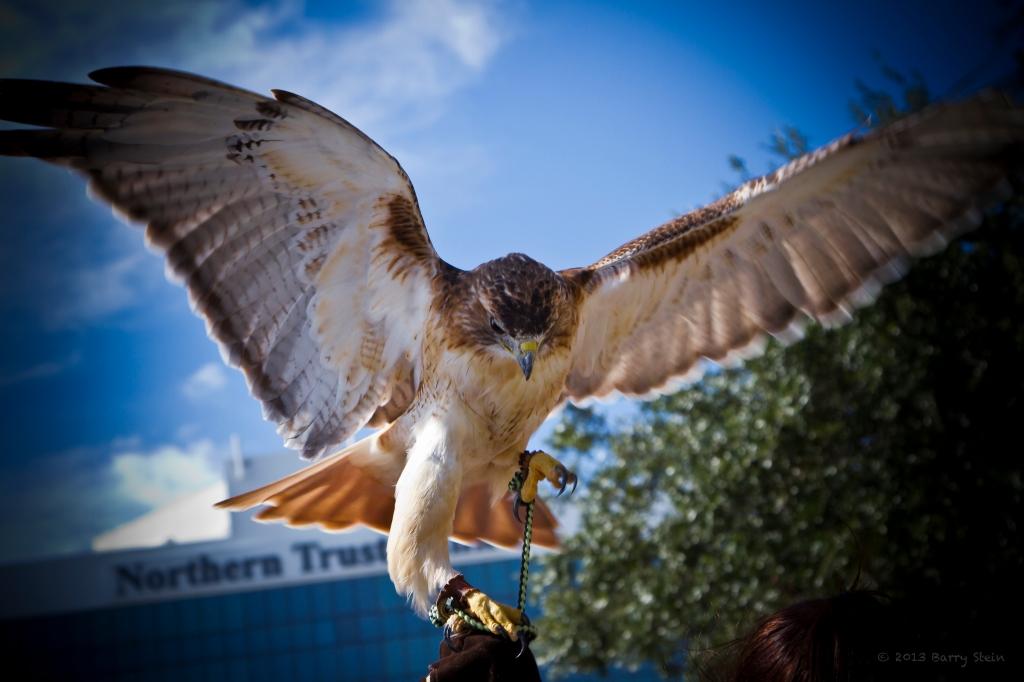 HawkFlap3-6390