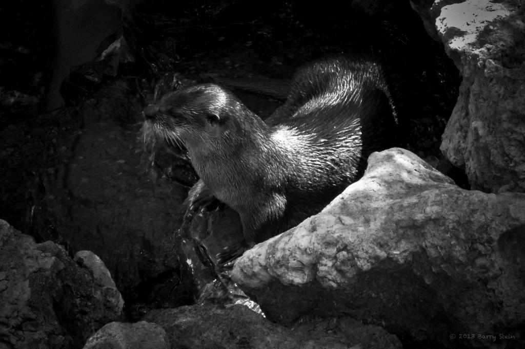 Otter2-5814