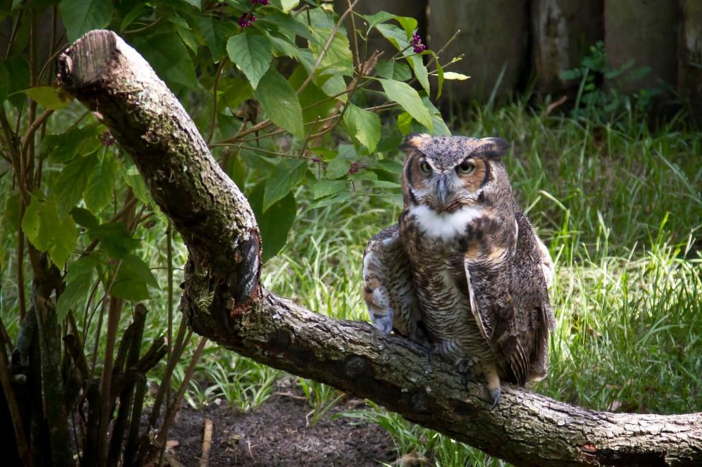 Owl-6025