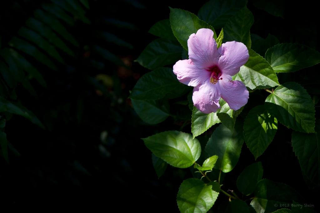 PurpleFlower-5544