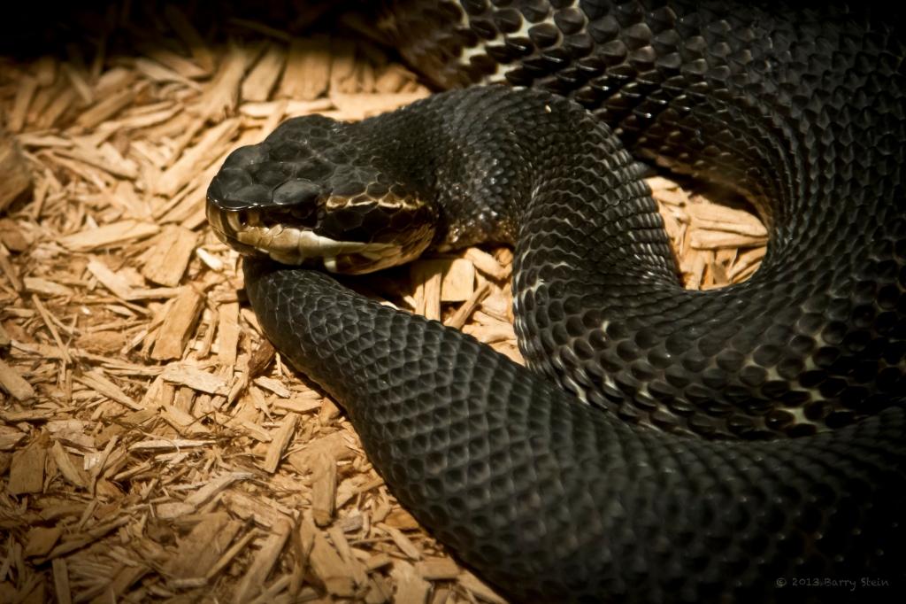 Snake2-5841