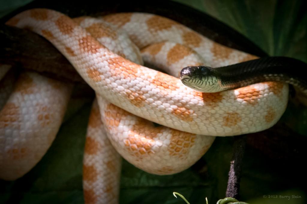 Snake3-5844