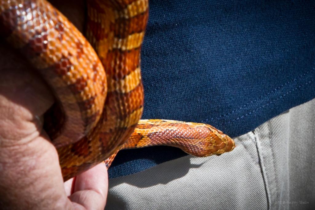 SnakeFingerFly-6220