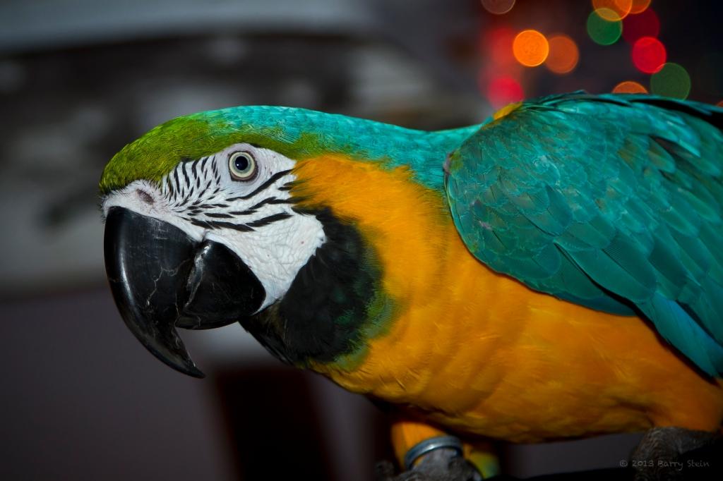 Parrot4-8176
