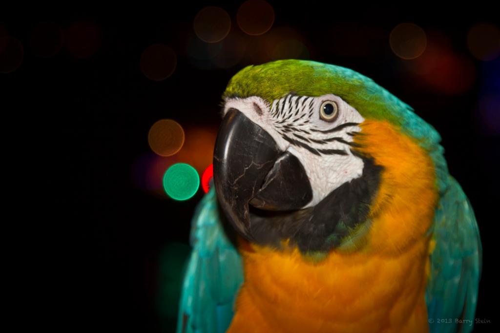 Parrot6-8295