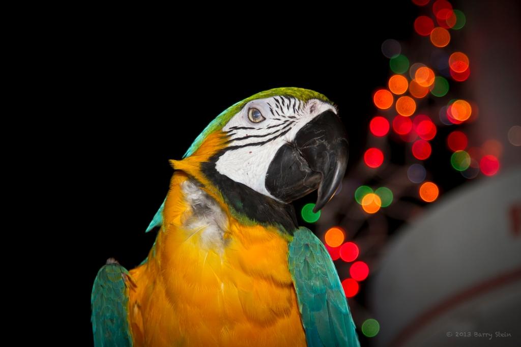 Parrot7-8535