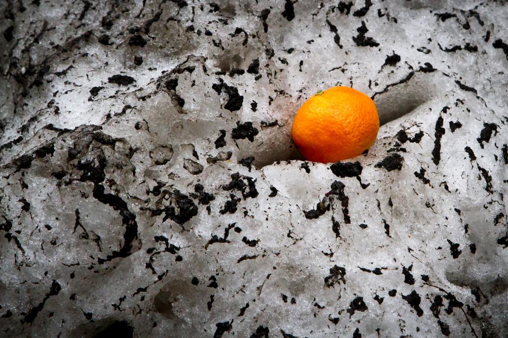 OrangeInTheSnow-9557