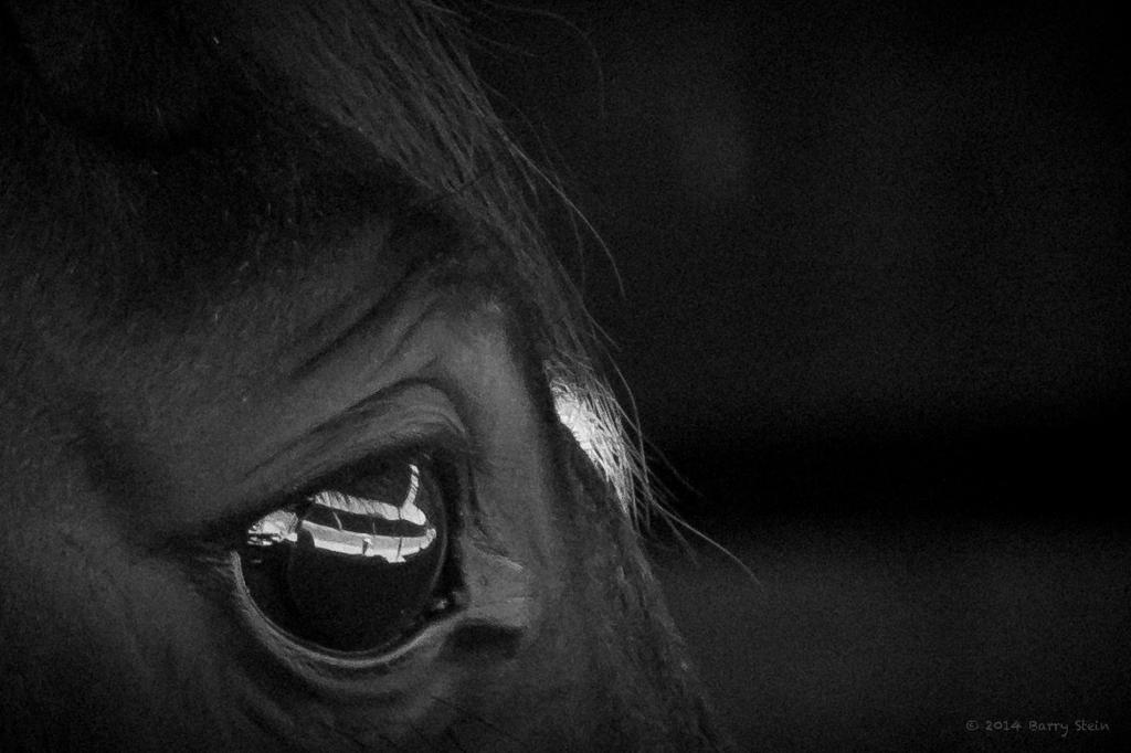 HorseEyes-2037
