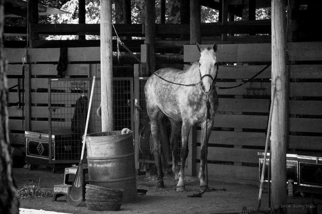 HorseStare-1991