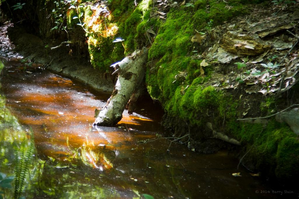 Rusty Creek-1827