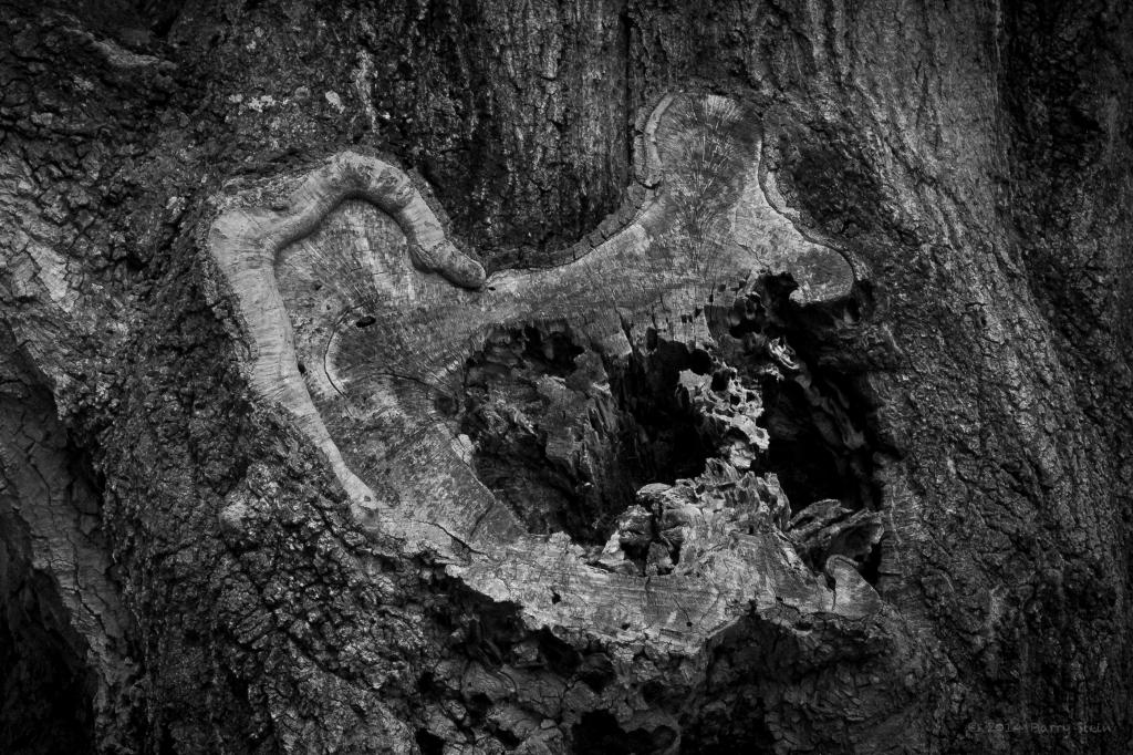 TreeBarkEar-2455