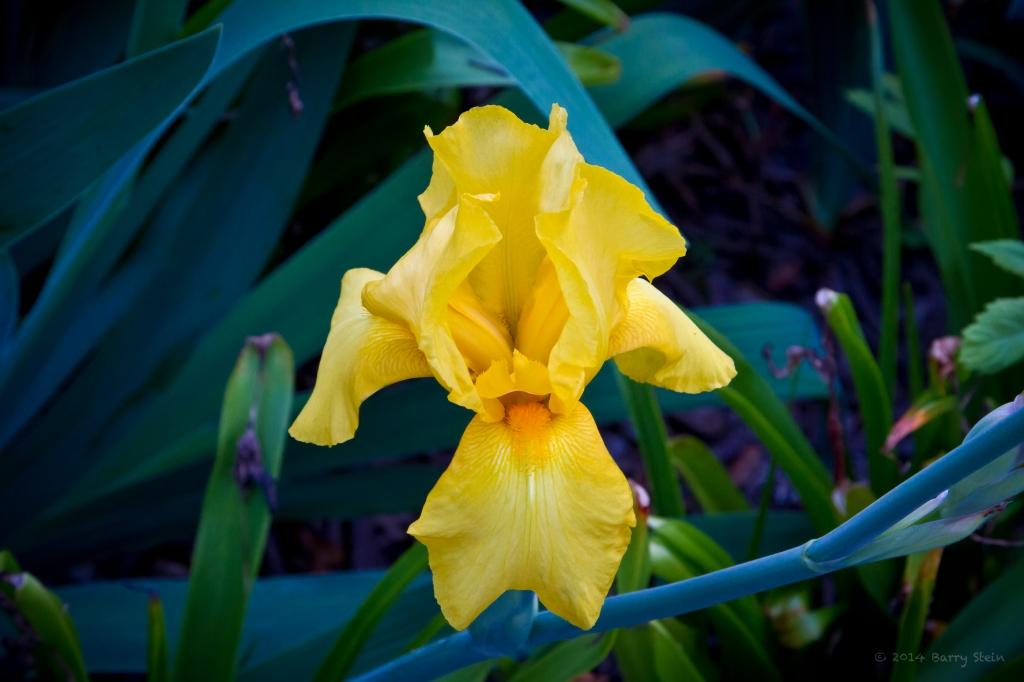 YellowFlowerRoswell-1900