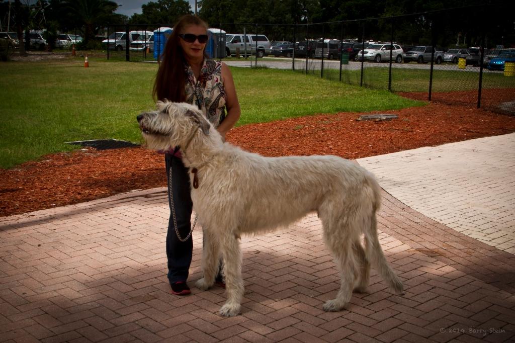 WolfhoundPose-3023