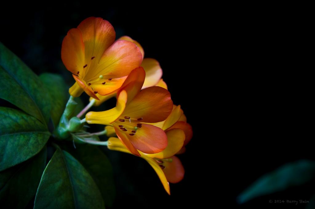 OrangeButtercup-6767