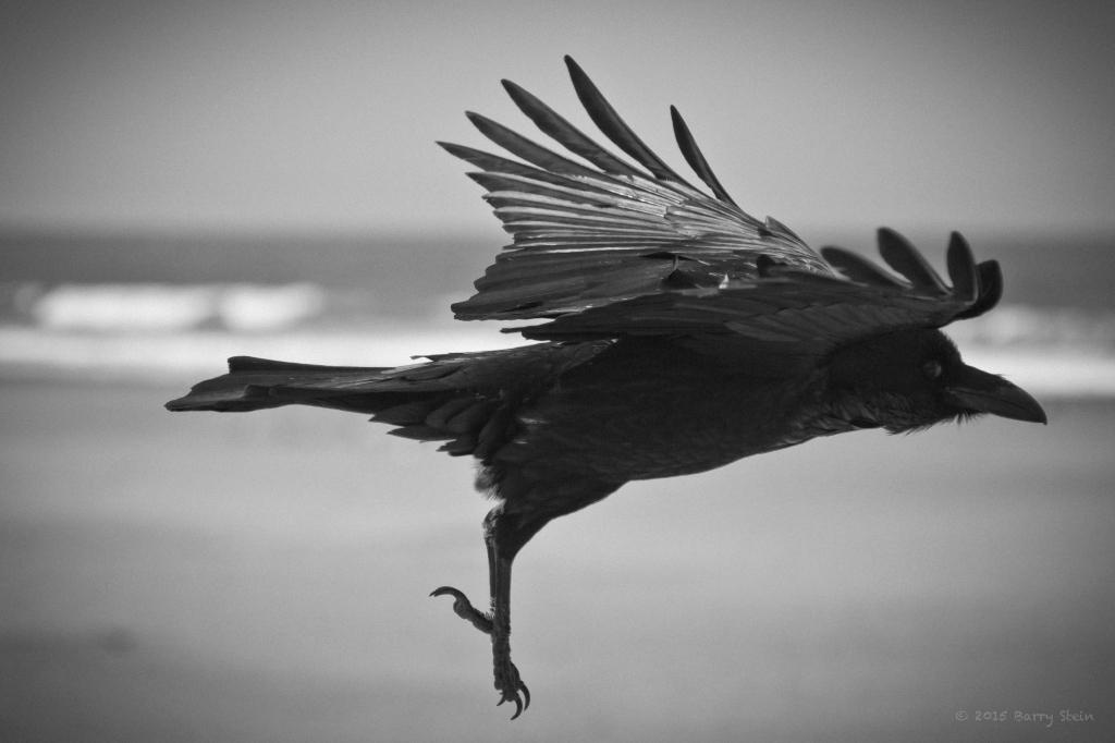 BlackBird-2150