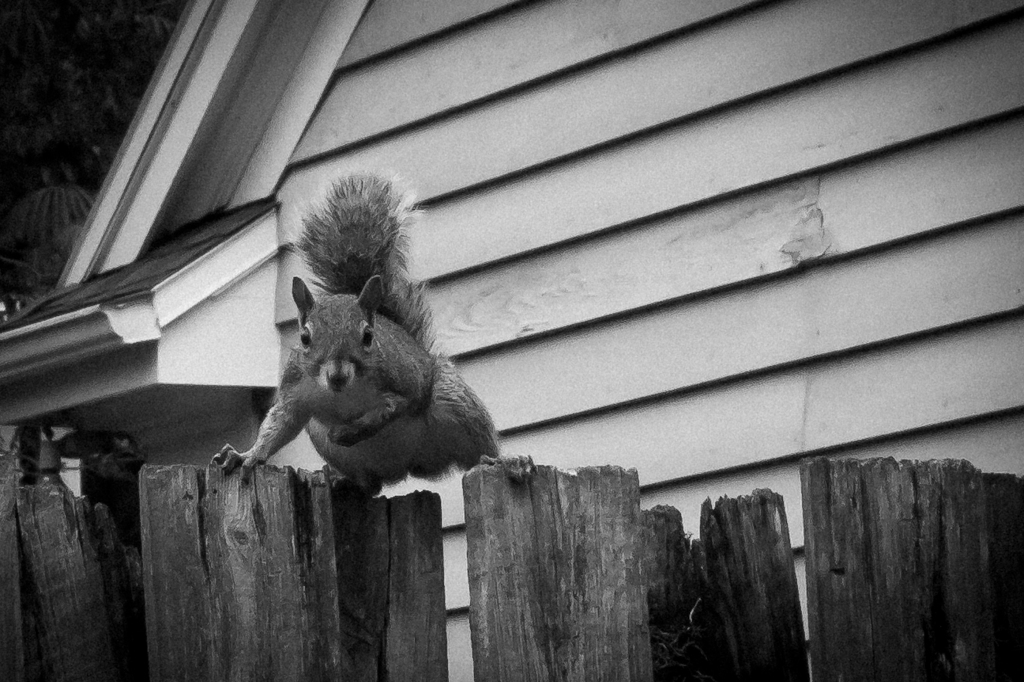 Squirrel-7651